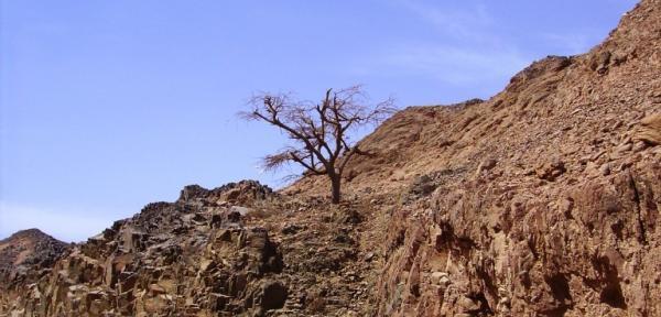 Wadi-4.jpg